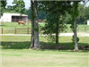 Three trees with a fence and animals in the distance
